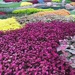 Canada's beautiful gardens.