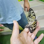 Photo of Butterfly House Varna