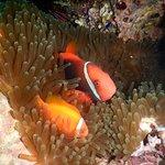 芽庄趣味潜水照片