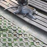 Foto de Three Monkeys Sanur