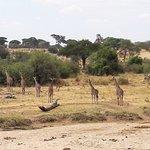 ภาพถ่ายของ Ernest Magic Tours & Safaris