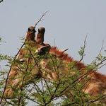 ภาพถ่ายของ Pilanesberg National Park