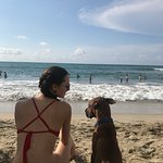 Beach dog, I named him Scooby