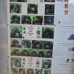 tablica informacyjna w biurze parku - rodziny goryli górskich