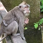 A fun day interacting with the monkeys.  My friend tripped and screamed which scared a monkey wh
