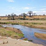 Ruaha Riverbed in Dry Season