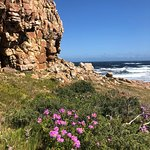 Cape Point Nature Reserve Photo