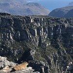 Foto de Montanha da Mesa (Table Mountain)