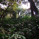 The Tall Trees Munnar Photo