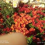 Ботанический сад-институт