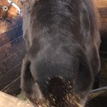 Bilde fra Laxnes Horse Farm