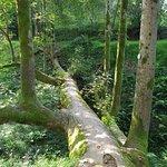 Фотография Батумский ботанический сад