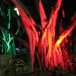 Flood light trees - Eplanade Cairns