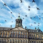Free Walking Tours Amsterdam Foto