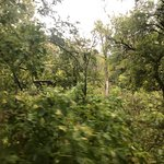 Eureka Springs & North Arkansas Railway resmi