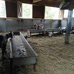 Foto de Carmelis Alpine Goat Cheese Artisan