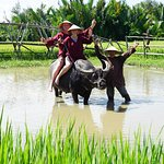 riding water buffalo- the BMW of Vietnam on the rice farm