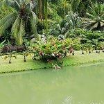 Plant d'eau