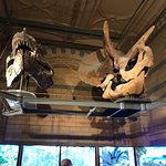 صورة فوتوغرافية لـ متحف التاريخ الطبيعي