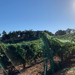Foto de JUSTIN Vineyards and Winery
