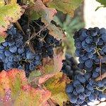 Foto van V. Sattui Winery
