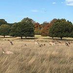 Fotografie: Richmond Park