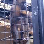 ภาพถ่ายของ Maruyama Zoo