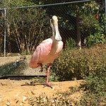 Sylvan Heights Bird Park-bild