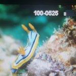 Nautilus Scuba Foto