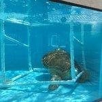 Loggerhead Marinelife Center Foto