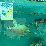 Фотография Sea Turtle Conservation Center, Sattahip