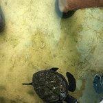 Photo of The Reef Vanuatu Zoological