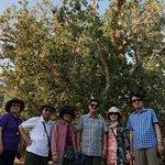 Photo of Zaccheus' Tree