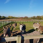 Bilde fra The Isle of Wight Donkey Sanctuary