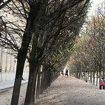ภาพถ่ายของ Jardin du Palais Royal