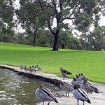 Фотография Королевский парк и ботанический сад