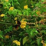Foto van Collodi Butterfly House