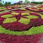 Fotografia de Jardim Botânico da Madeira