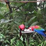 صورة فوتوغرافية لـ Parque das Aves