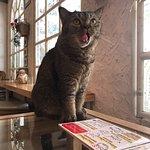 ภาพถ่ายของ Caturday Cat Cafe