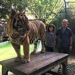 ภาพถ่ายของ คุ้มเสือ