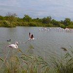 صورة فوتوغرافية لـ Camargue Nature Park
