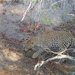 Jock Safari Lodge Foto