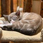 Sleeping kitty.