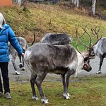 The owner has so much love for her reindeers