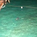 Eagle Rays at night