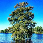 Photo of Ultimate Swamp Adventures