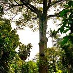 Jardin Botanico de Medellin