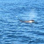 Oz Whale Watching의 사진