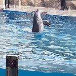 Фотография Батумский дельфинарий